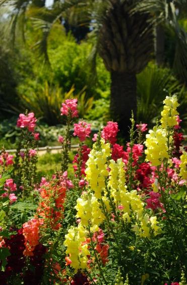 Комнатные влаголюбивые растения фото